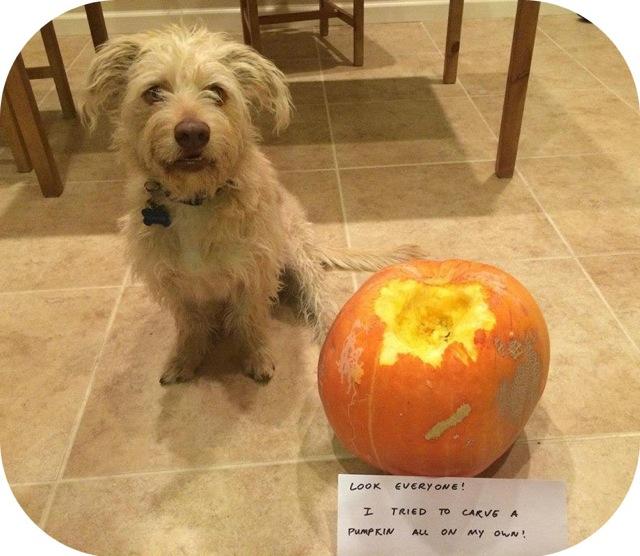 I helped carve the pumpkin!