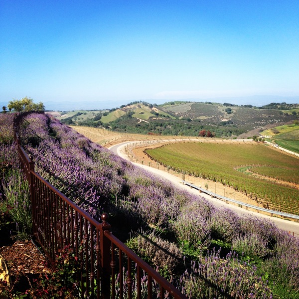 Daou Winery, Paso Robles, CA